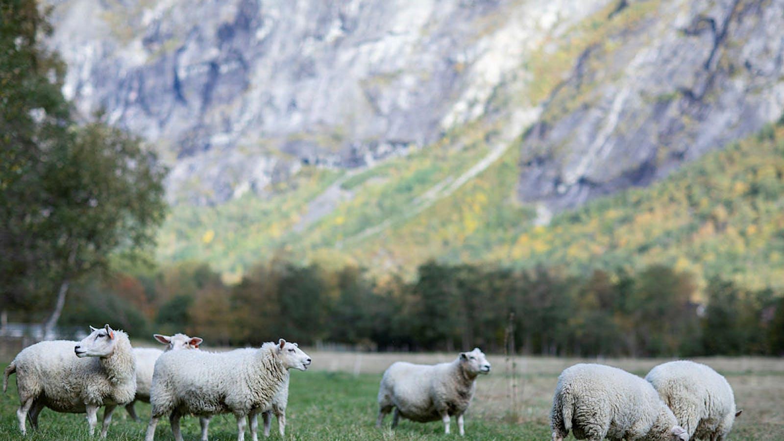Garn fra norske sauer. Spunnet i Romsdalen.